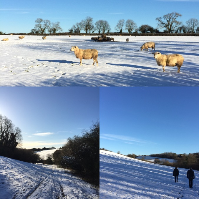 Snowy Cotswolds