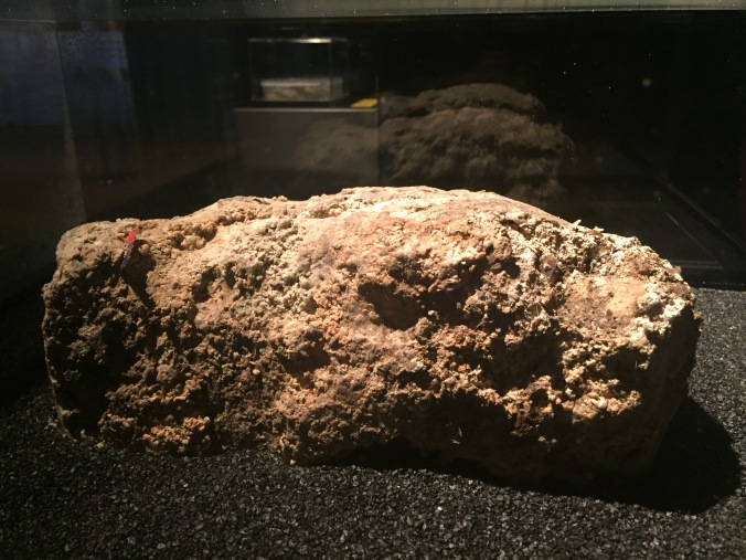 The Museum of London Fatberg