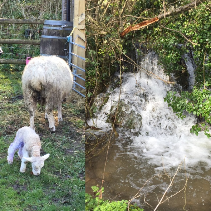 Full Water Courses and New Lambs