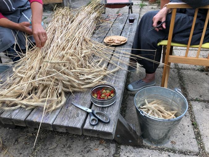 Cutting Rye