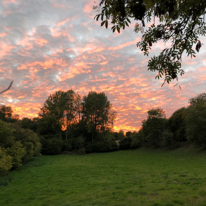 Autumnal Sunset From My Vegetable Patch