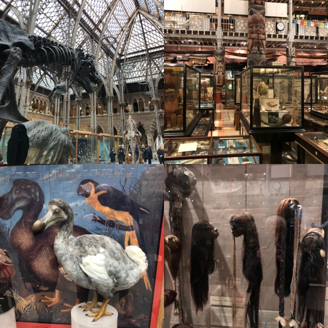 Inside The Oxford Natural History Museum and Pitt Rivers Museum