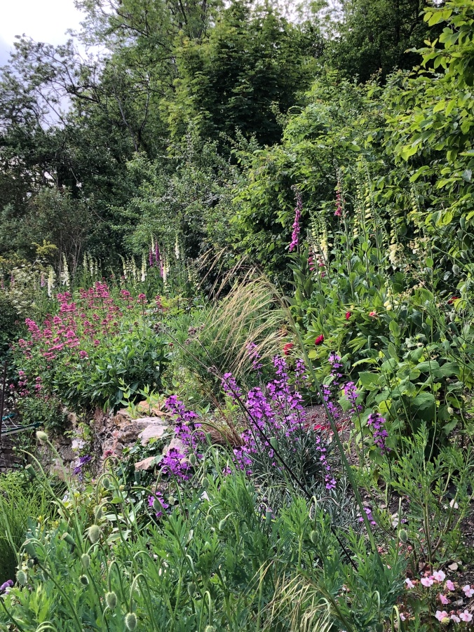Foxgloves, Erigeron, Geraniums And Flowering Weeds At The Back Of Our House