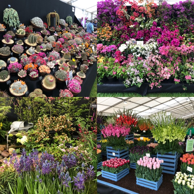 Riot of Colour In The Floral Tent At The Malvern Spring Show
