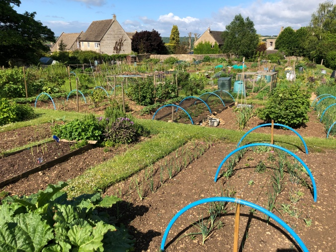 Examples Of Well Tended Allotments At Rose Barrow