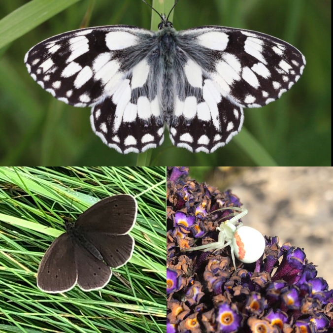 Marbled White and Ringlet Butterflies and A Crab Spider