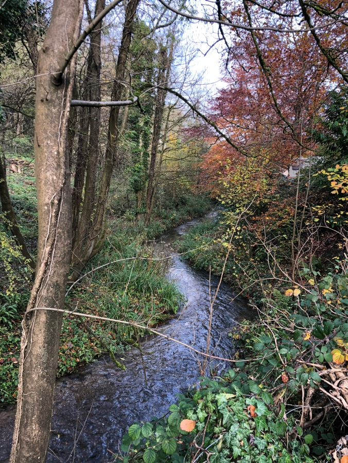 Dipper Habitat On The Outskirts Of Nailsworth