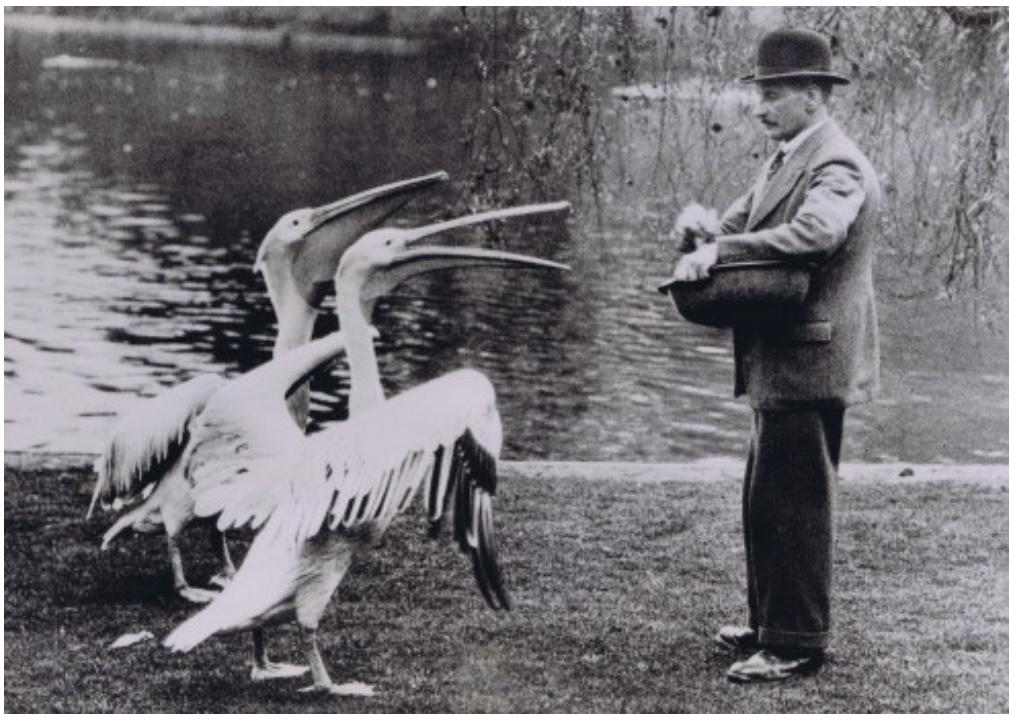 Feeding Pelicans In St James's Park