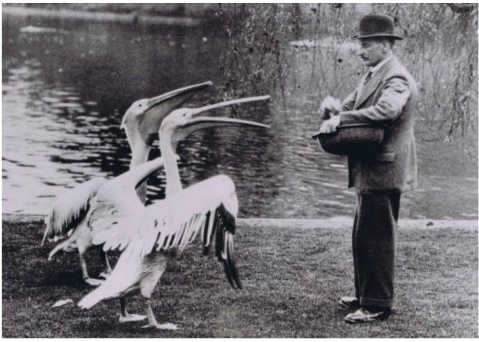 Feeding Pelicans In St James's Park