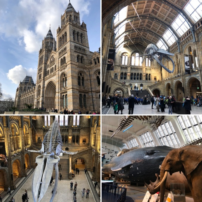 Views Of The Natural History Museum, Home of the Wildlife Photography Exhibition And Bringing Back Memories Of Taking The Kids Back In The 90s