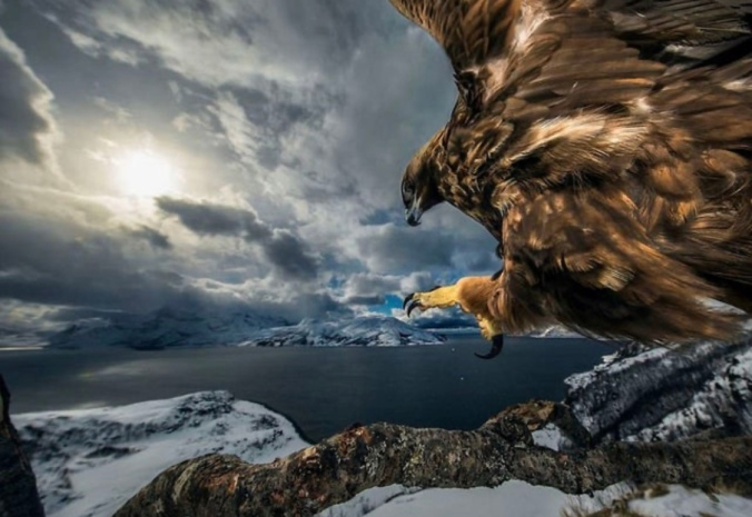 Wildlife Photographer Of The Year: Winner Of The Birds Behaviour Section, Auden Rikardsen