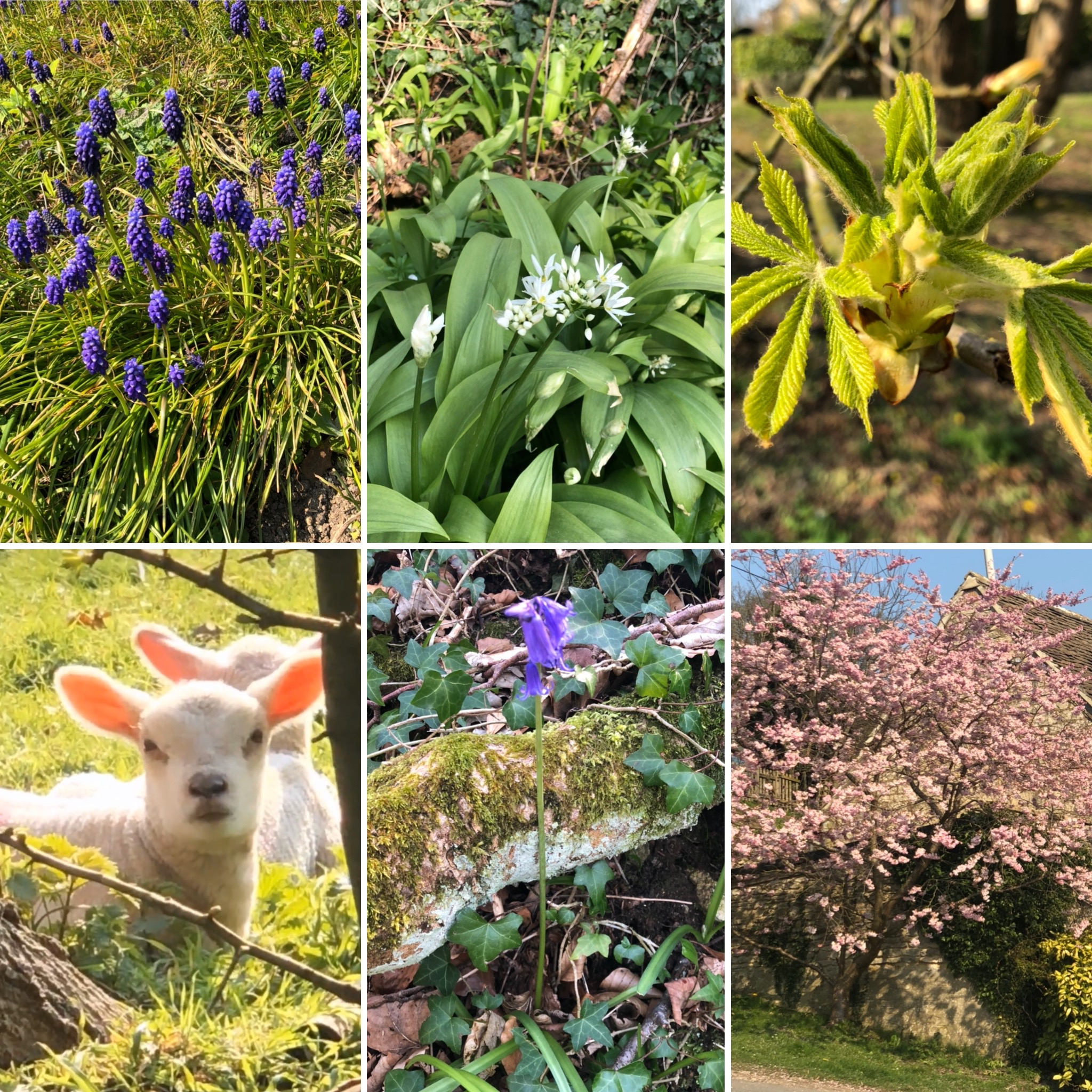 Lovely Signs Of Spring Alongside My Walks