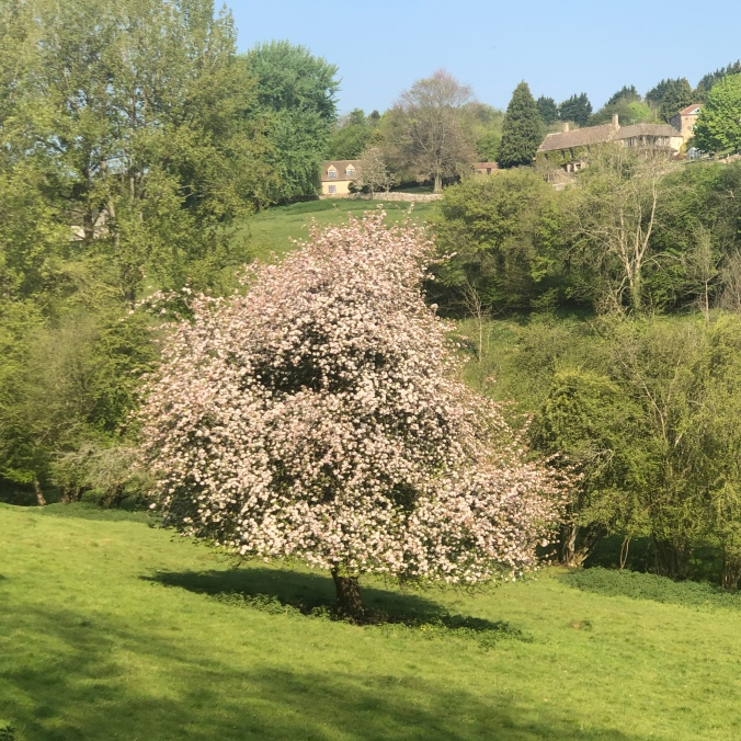 Peak Blossom In The Field Next To Ours