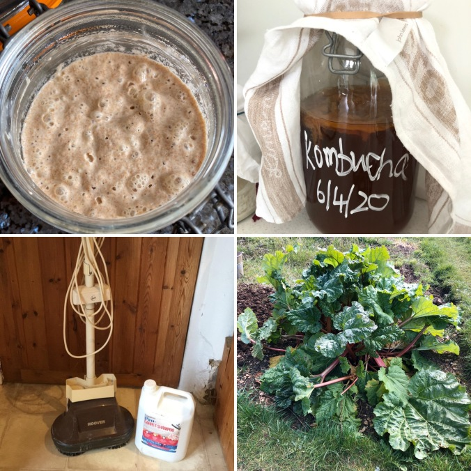 Sourdogh Starter, Kombucha Scoby, Carpet Cleaner And Rhubarb - Just A Fraction Of The Things Swapped and Shared By LSW's WhatsApp Group